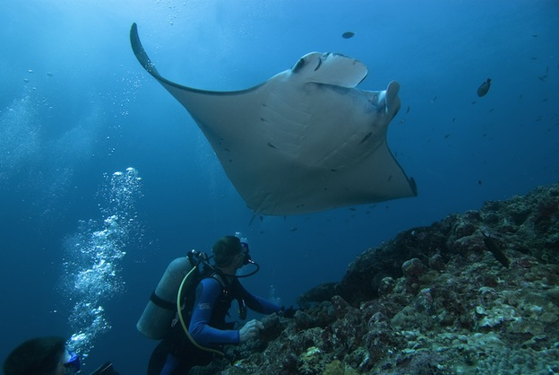 Manta Ray Scientific Research